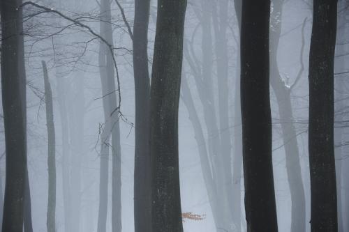 Frédéric-Demeuse-WALD-Photography-Hautes-Fagnes-Winter-Belgium-INSTA-3