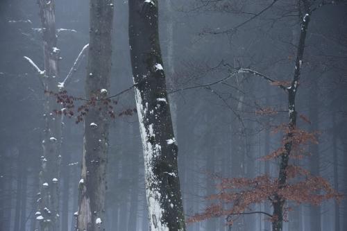 Frédéric-Demeuse-WALD-Photography-Hautes-Fagnes-Winter-Belgium-INSTA-4