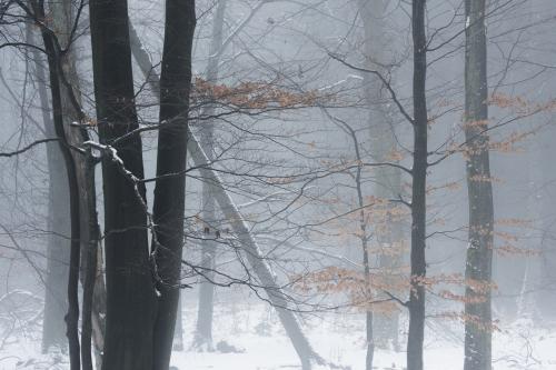 Frédéric-Demeuse-WALD-Photography-Hautes-Fagnes-Winter-Belgium-INSTA