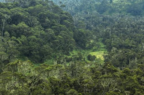 Frédéric-Demeuse-WALD-design-green-tide-primeval-forest