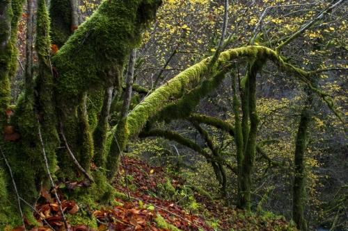 Frédéric-Demeuse-WALD-design-natural-forest