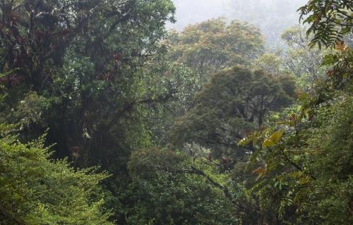 Frédéric-Demeuse-WALD-tropical-forest