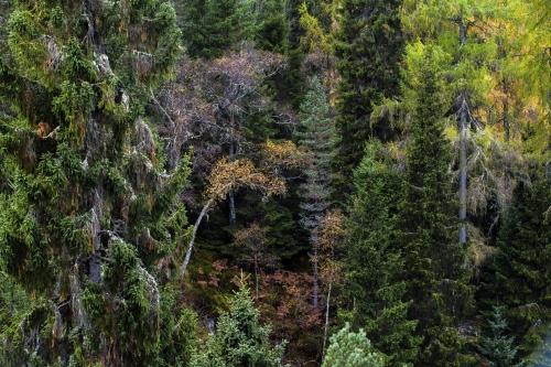 Frédéric-Demeuse-Wald-Glen-Affric-Highlands-Scotland