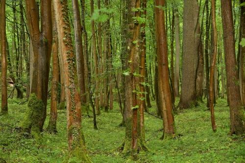 Frédéric-Demeuse-Wald-forest-photography-foret-de-soignes-brussels