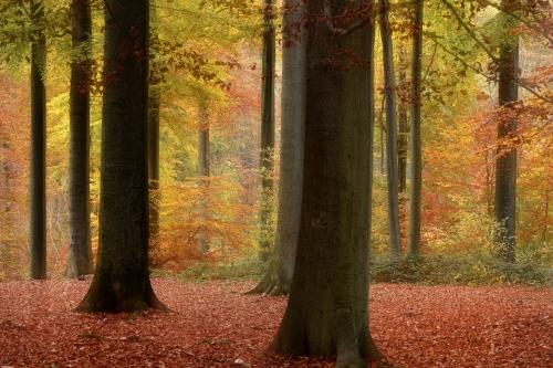 Frédéric-Demeuse-Wald-forest-photography