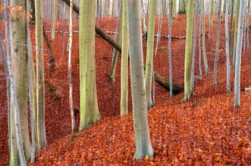 Frédéric-Demeuse-forest-photography-foret-de-soignes