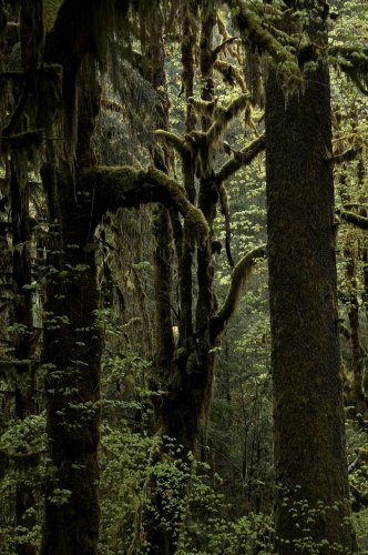 Frédéric-Demeuse-forest-photography-temperate-rainforest