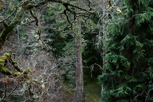 Frédéric-Demeuse-forest-photograpphy-foret-de-soignes-2