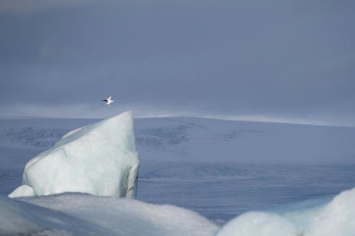 Frédéric-Demeuse-jokulsarlon-iceland