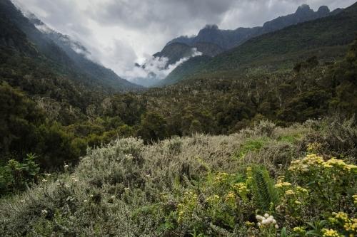 Frédéric-Demeuse-Rwenzori-mountains-RDC