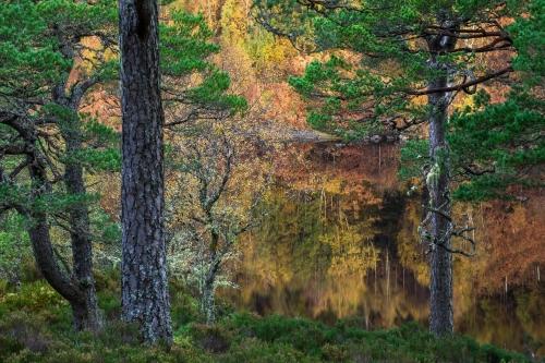 Frédéric-Demeuse-nature-photographer-highlands-scotland-5