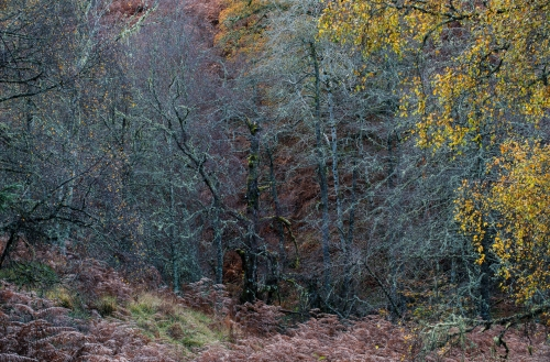 Frédéric-Demeuse-nature-photography-highlands-glen-affric-scotland