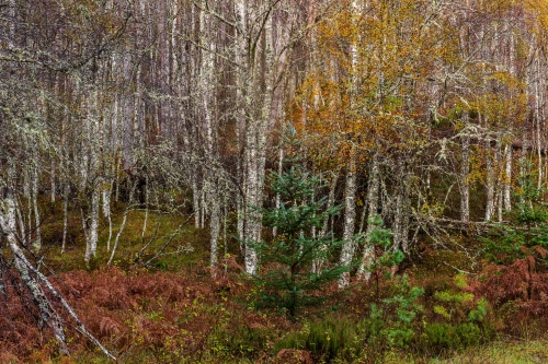Frédéric Demeuse-nature-photography-highlands-scotland-autumn
