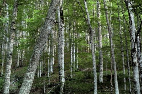 Frédéric-Demeuse-primeval-beach-forest-Biograska-gora-Montenegro
