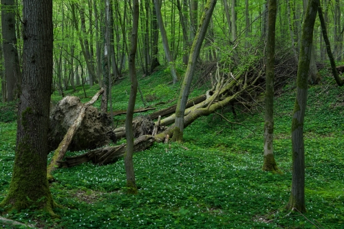 Frédéric Demeuse-WALD-forest-green-2