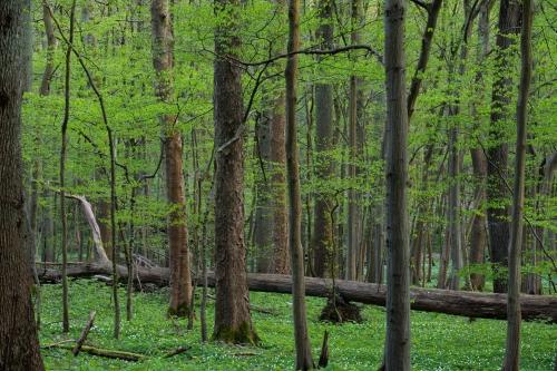 Frédéric Demeuse-WALD-forest-green-3