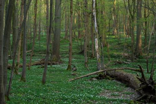 Frédéric Demeuse-WALD-forest-green-4