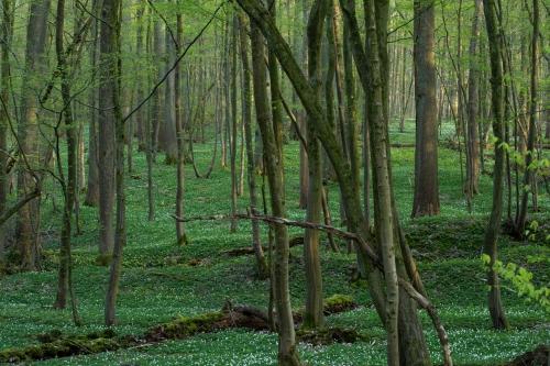 Frédéric Demeuse-WALD-forest-green-5