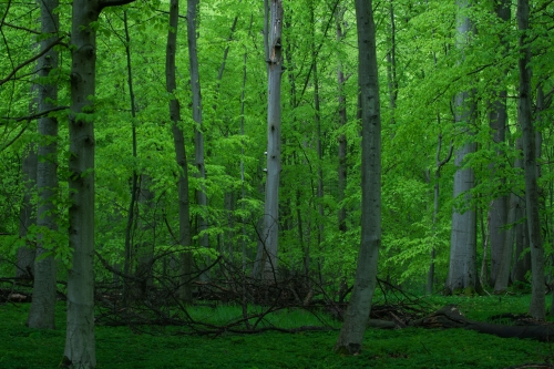 Frédéric Demeuse-WALD-forest-green