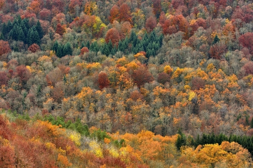 Frederic-Demeuse-forest-photography-doubs-jura-france
