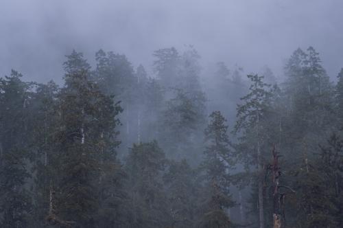 Frédéric-Demeuse-photography-forest-landscape-Wald-2 copie
