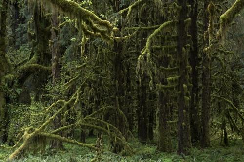 Frédéric-Demeuse-photography-forest-landscape-Wald-3 copie