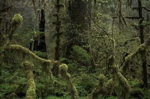 Frédéric-Demeuse-photography-forest-landscape-Wald-3