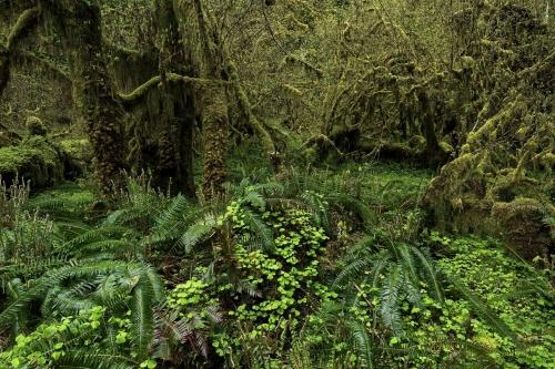 Frédéric-Demeuse-photography-forest-landscape-Wald-4