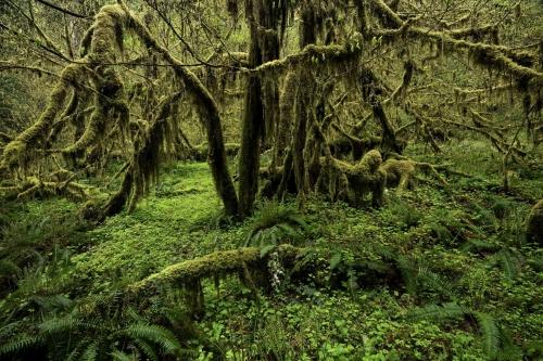 Frédéric-Demeuse-photography-forest-landscape-Wald-5
