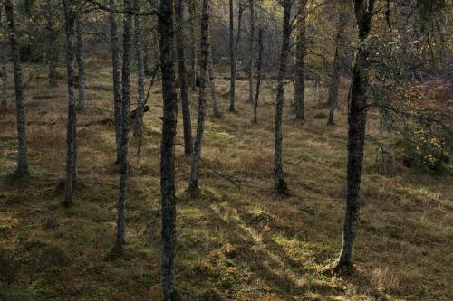 Frédéric-Demeuse-photography-forest-landscape-Wald-6 copie