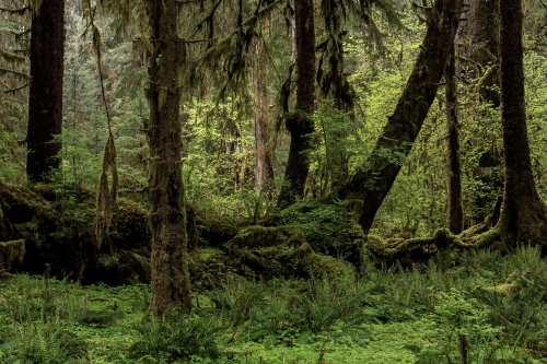 Frédéric-Demeuse-photography-forest-landscape-Wald-6