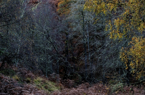 Frédéric-Demeuse-photography-forest-landscape-Wald-7