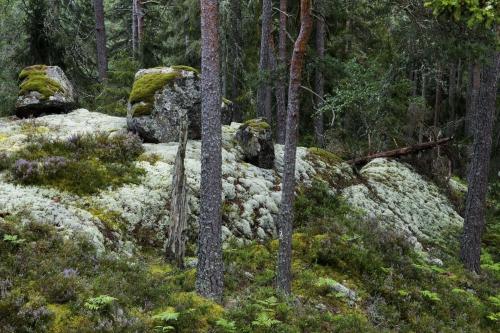 Frédéric-Demeuse-photography-forest-landscape-Wald-8