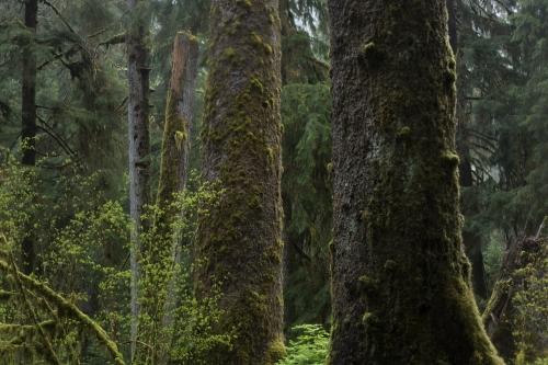 Frédéric-Demeuse-photography-forest-landscape-Wald copie