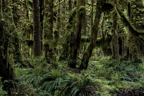Frédéric-Demeuse-photography-forest-landscape-Wald