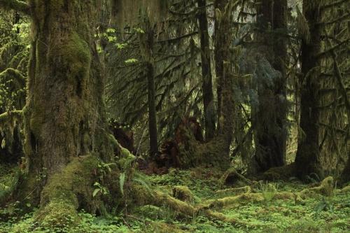 Frédéric-Demeuse-photography-forest-landscape-primeval-forests-forgotten-places copie