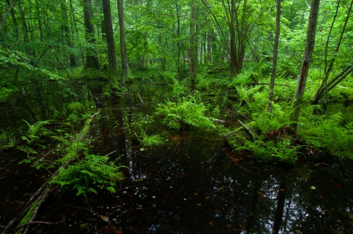 WALD-frederic-demeuse-forest-nature-photography-Bialowieza