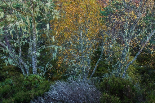 WALD-frederic-demeuse-forest-nature-photography copie 2