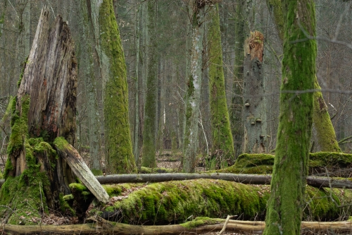 WALD-frederic-demeuse-forest-nature-photography-primeval-3