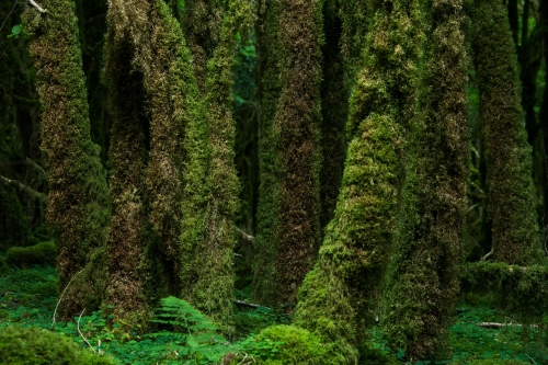 WALD-frederic-demeuse-forest-nature-photography-pyrenees-8