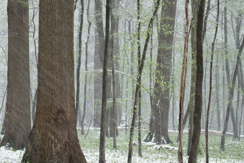 WALD-frederic-demeuse-forest-nature-photography-pyrenees-soignes