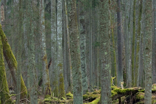 WALD-frederic-demeuse-forest-nature-photography-pyrenees-trees-6