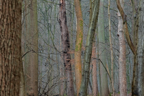 WALD-frederic-demeuse-forest-nature-photography-pyrenees-trees