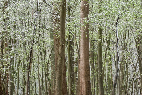 WALD-frederic-demeuse-forest-nature-photography-trees-7