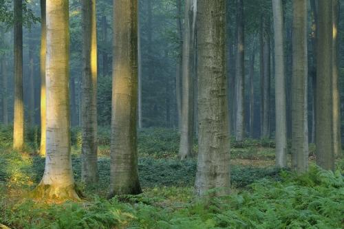 Wald-Forêt de Soignes-Septembe