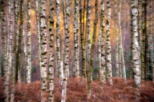 frédéric-demeuse-autumn-impression