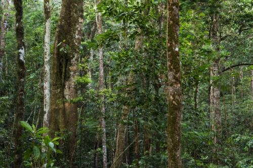 frédéric-demeuse-cliud-forest-los-quetzales-costa-rica-14