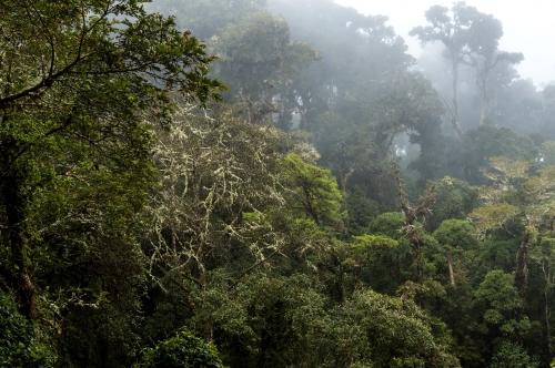 frédéric-demeuse-cloud-forest-los-quetzales-costa-rica