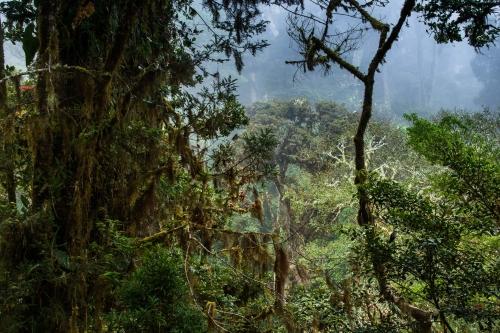 frédéric-demeuse-forest-photography-costa-rica-10