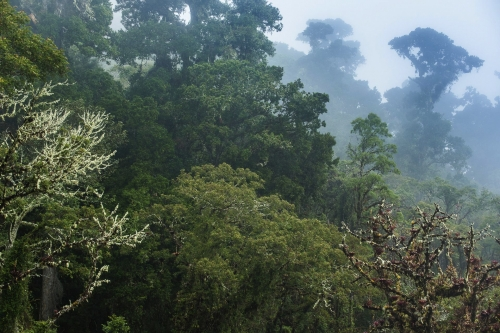 frédéric-demeuse-forest-photography-costa-rica-7